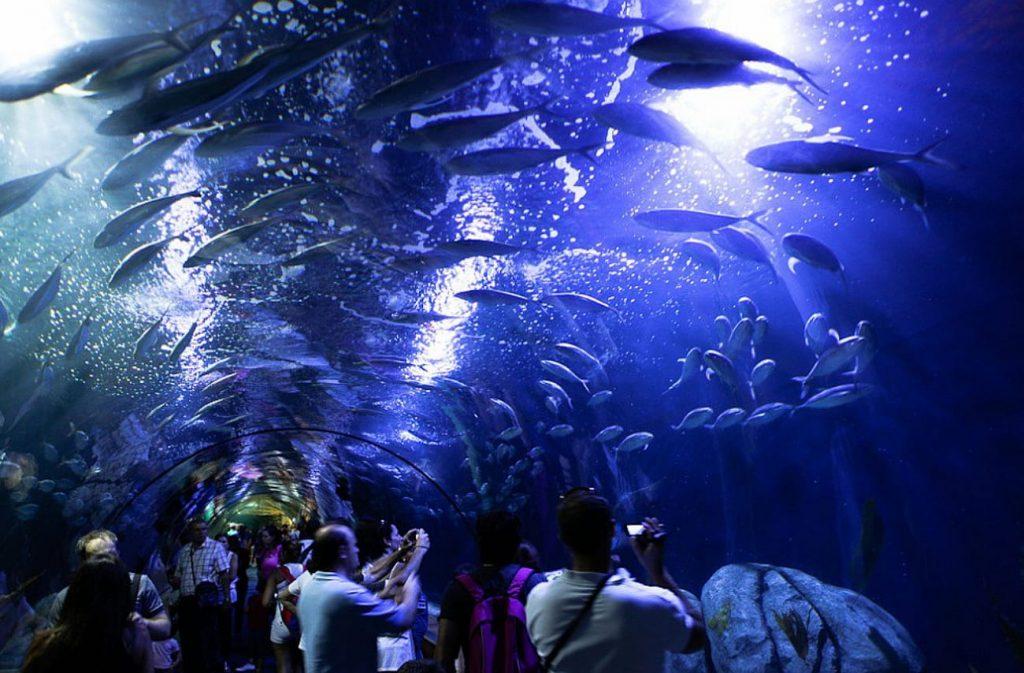 посетить океанариум в Валенсии