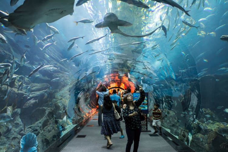 аквариум в торговом центре  Дубай молл